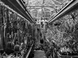 Botanical Garden Zuidas